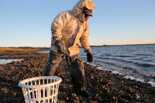 "Ed ""Lee Man"" Atkins works hard in a public oyster bed near the shores of St. Helena Island."