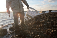 """This morning Ed """"Lee Man"""" Atkins has found the perfect oyster bed."""