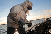 """To determine if the public oyster bed is producing quality oysters, Ed """"Lee Man"""" Atkins, begins shucking a few of the oysters."""