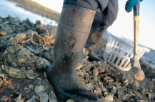 """Ed """"Lee Man"""" Atkins sorts through the public oyster bed in order to find the right produce."""