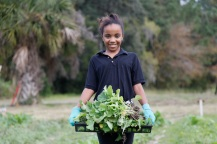 Kalila Saunders prepares to transfer young collard greens to a new spot in the garden.