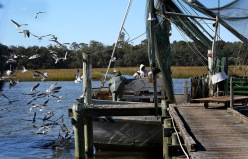 Bradley (in white hoodie) and his assistant Bron Singleton (gray jacket) sort their catch. Birds swarm the boat, scrambling for the unwanted fish that are thrown back into the water.