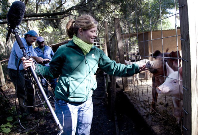 Ali O'Hara pets a pig for the first time during a break in filming at Ben Johnson's farm on St. Helena Island, S.C. O'Hara grew up in Michigan and came to South Carolina to study public relations at the University of South Carolina's graduate school. She now works as a multimedia journalist for WSPA-CBS.