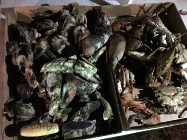 Roasted oysters and crabs are a hot commodity during the annual Heritage Fish Fry.